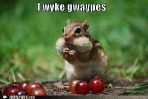 funny-captions-i-wyke-gwaypes-300x201