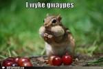 funny-captions-i-wyke-gwaypes-150x100