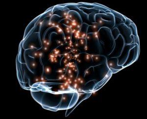 brain-300x242